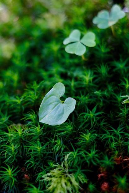 苔の美-長野県伊那市:仙丈ヶ岳