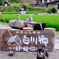 Photos: 旅慣れた紋クン-岐阜県白川村:白川郷