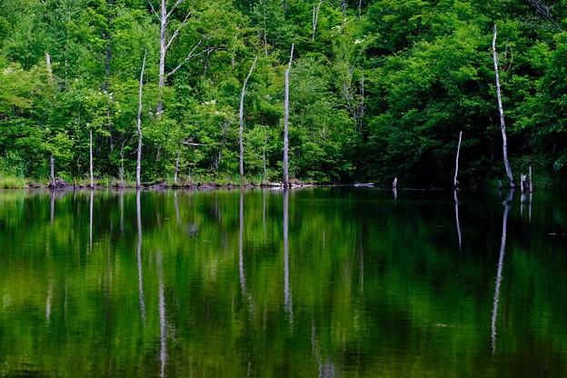 緑色の池-長野県松本市:乗鞍高原