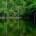 Photos: 緑色の池-長野県松本市:乗鞍高原
