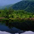 今年の夏-長野県松本市:乗鞍高原