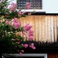 Photos: 今年の夏-奈良県五條市:五條新町