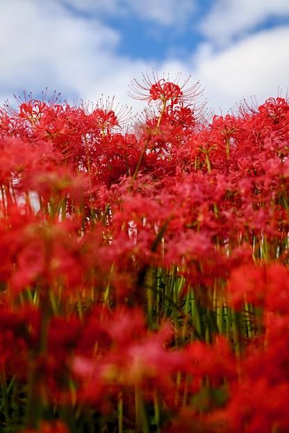 Photos: かすかな青空-奈良県御所市:一言主神社
