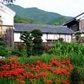 彼岸花と白壁-奈良県御所市:一言主神社