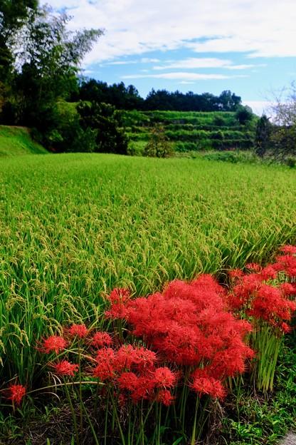 柔らかな日差し-奈良県御所市:葛城古道