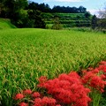 Photos: 柔らかな日差し-奈良県御所市:葛城古道