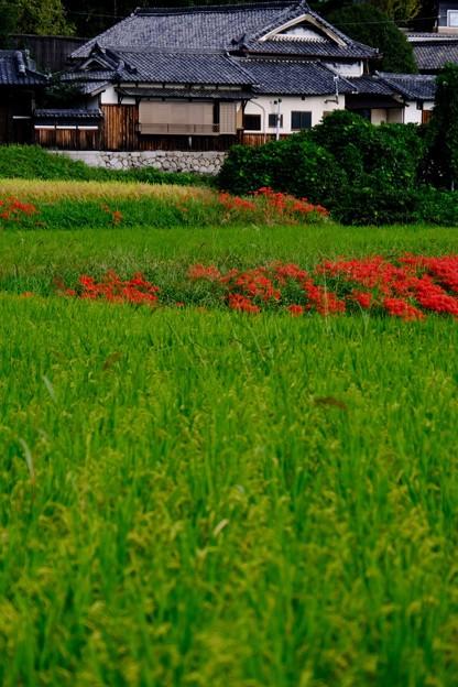 長閑な秋の日-奈良県御所市:葛城古道