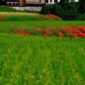 Photos: 長閑な秋の日-奈良県御所市:葛城古道