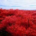 秋の色-奈良県御所市:九品寺