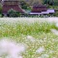 秋のかやぶきの里-京都府南丹市:美山
