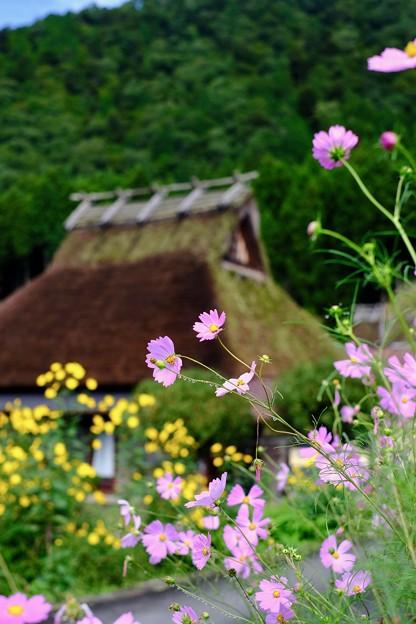 秋の花に囲まれて-京都府南丹市:美山