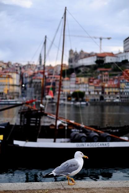 清々しい一日の始まり-Porto, Portugal