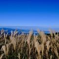 ススキたなびく山頂へ-大阪府千早赤阪村:大和葛城山