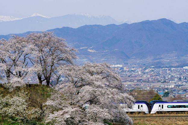 桜を愛でながら
