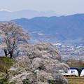 Photos: 桜を愛でながら