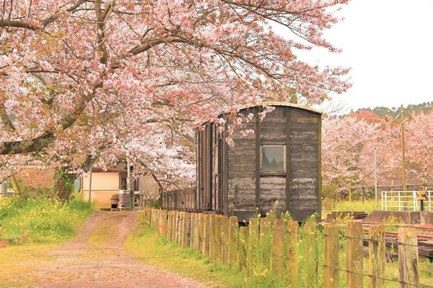 里見の貨車の春1