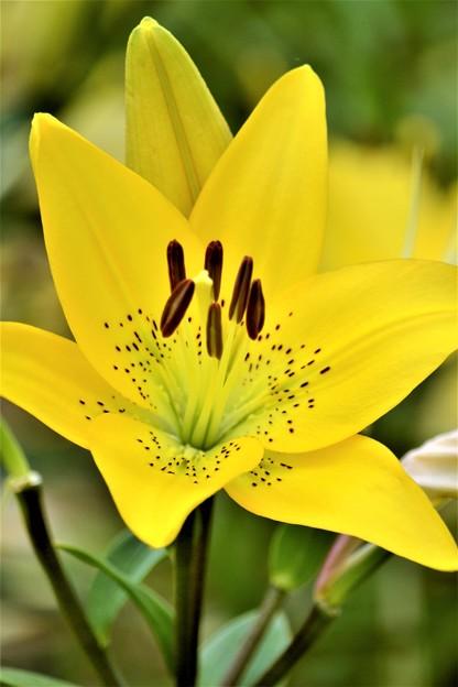 黄色い花2012