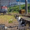 Photos: 浜川崎の猫