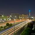 Photos: 夜の夢の島大橋と東京スカイツリー
