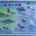 Photos: 三島池 (3)