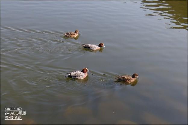 三島池 (4)