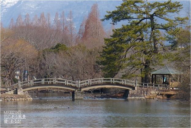 三島池 (8)