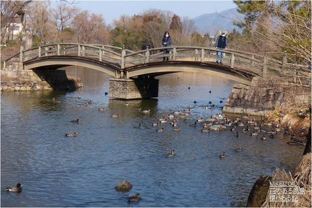 三島池 (12)