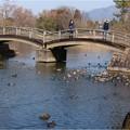 Photos: 三島池 (12)