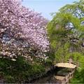 中央小公園付近 (1)