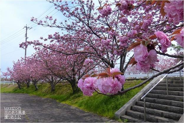 中央小公園付近 (7)