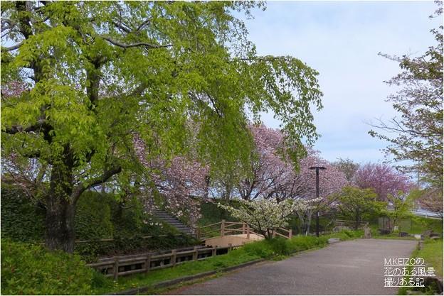 中央小公園付近 (3-1)
