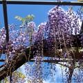 曼陀羅寺公園 (9)