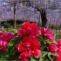 曼陀羅寺公園 (11)