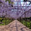 曼陀羅寺公園 (12)