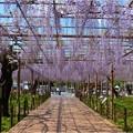 曼陀羅寺公園 (15)