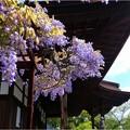 曼陀羅寺公園 (33)