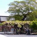 曼陀羅寺公園 (35)