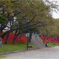 天王川公園 (1)