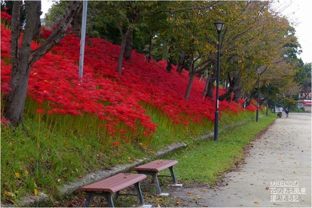 Photos: 天王川公園 (4)