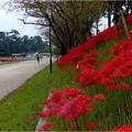 Photos: 天王川公園 (7)