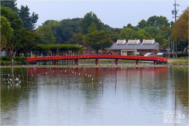 天王川公園 (10)