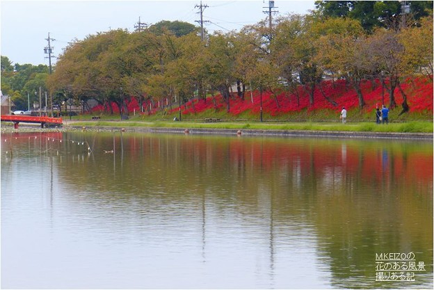 Photos: 天王川公園 (11)