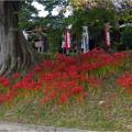 Photos: 天王川公園 (12)