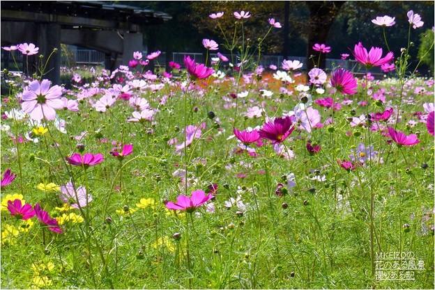 木曽三川公園センター (15)