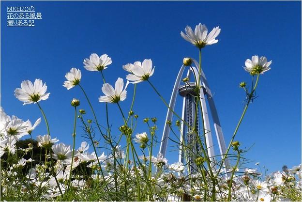138タワーパーク (24)