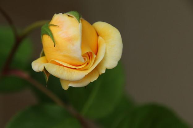 Photos: IMG_26860