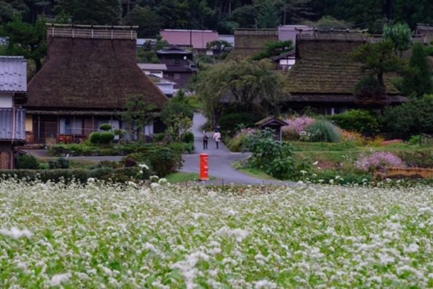 蕎麦の花咲く山里