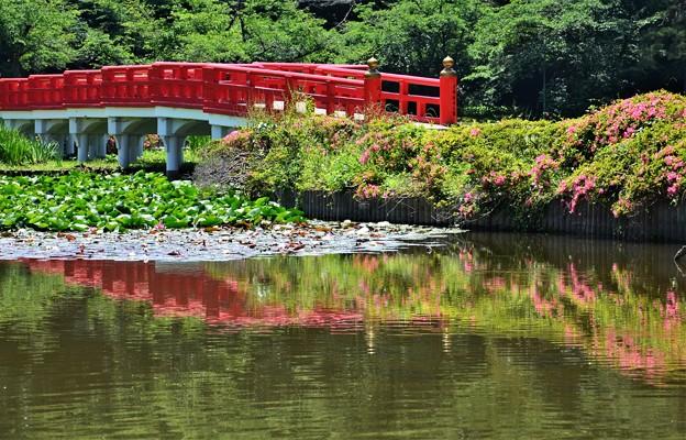 ツツジと赤い橋