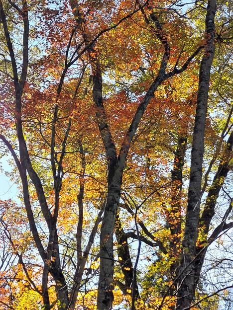木立の中の紅葉