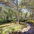 林の中の小川